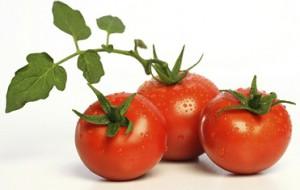 fresh-tomatoes1.jpg